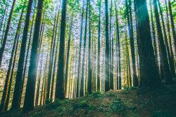 Photo of 0 Garapatos Redwoods Lot 211 and 10, CARMEL, CA 93923 (MLS # ML81764403)