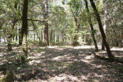 Photo of 4271 State Hwy 299, BURNT RANCH, CA 95527 (MLS # ML81772488)