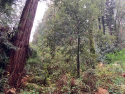 Photo of 0 Glengarry RD, FELTON, CA 95018 (MLS # ML81776925)