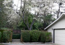 Photo of 24160 Dawnridge DR, LOS ALTOS HILLS, CA 94024 (MLS # ML81738109)