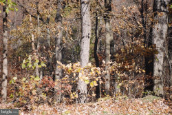 Photo of Lot 6 Greenbrier ROAD, New Bloomfield, PA 17068 (MLS # 1000093654)