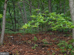 Photo of Willow TRAIL, Winchester, VA 22602 (MLS # 1000270422)