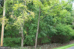 Photo of - Greengarden ROAD, Bluemont, VA 20135 (MLS # 1002357770)