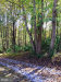 Photo of 0 Hoods Mill SW, Cooksville, MD 21723 (MLS # MDHW275286)