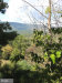 Photo of 248 11-A The Hill ROAD, Unit BLDG 11 UNIT A, Basye, VA 22810 (MLS # 1009934084)