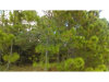 Photo of Water Road, CLERMONT, FL 34714 (MLS # G4848216)