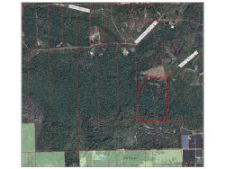 Photo of Tree Forest Court, PIERSON, FL 32180 (MLS # V4718994)