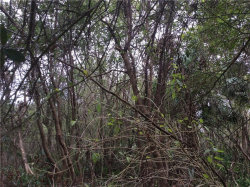 Photo of Antilla /San Rafael Paper Street, LAKE HELEN, FL 32744 (MLS # V4722900)
