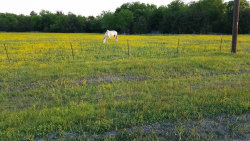 Photo of 1577 Private Road 2737, Lot 55, Caddo Mills, TX 75135 (MLS # 13720328)