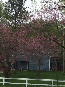 Tiny photo for 68241 52nd Street, Lawrence, MI 49064 (MLS # 19025234)