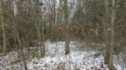 Photo of 6719 126 Avenue, Unit Parcel B, Fennville, MI 49408 (MLS # 17045496)