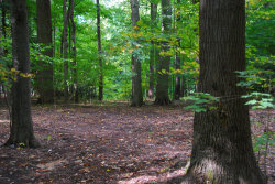 Photo of Lot 37 Beech Drive, South Haven, MI 49090 (MLS # 20040587)