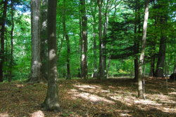 Photo of Lot 39 Beech Drive, South Haven, MI 49090 (MLS # 20040622)