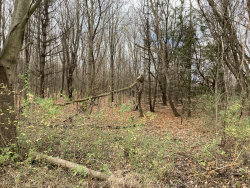 Photo of 710 Blue Star Highway, South Haven, MI 49090 (MLS # 20047900)