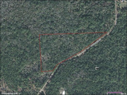 Photo of 800 Old Bubbly Road, PIERSON, FL 32180 (MLS # V4723222)