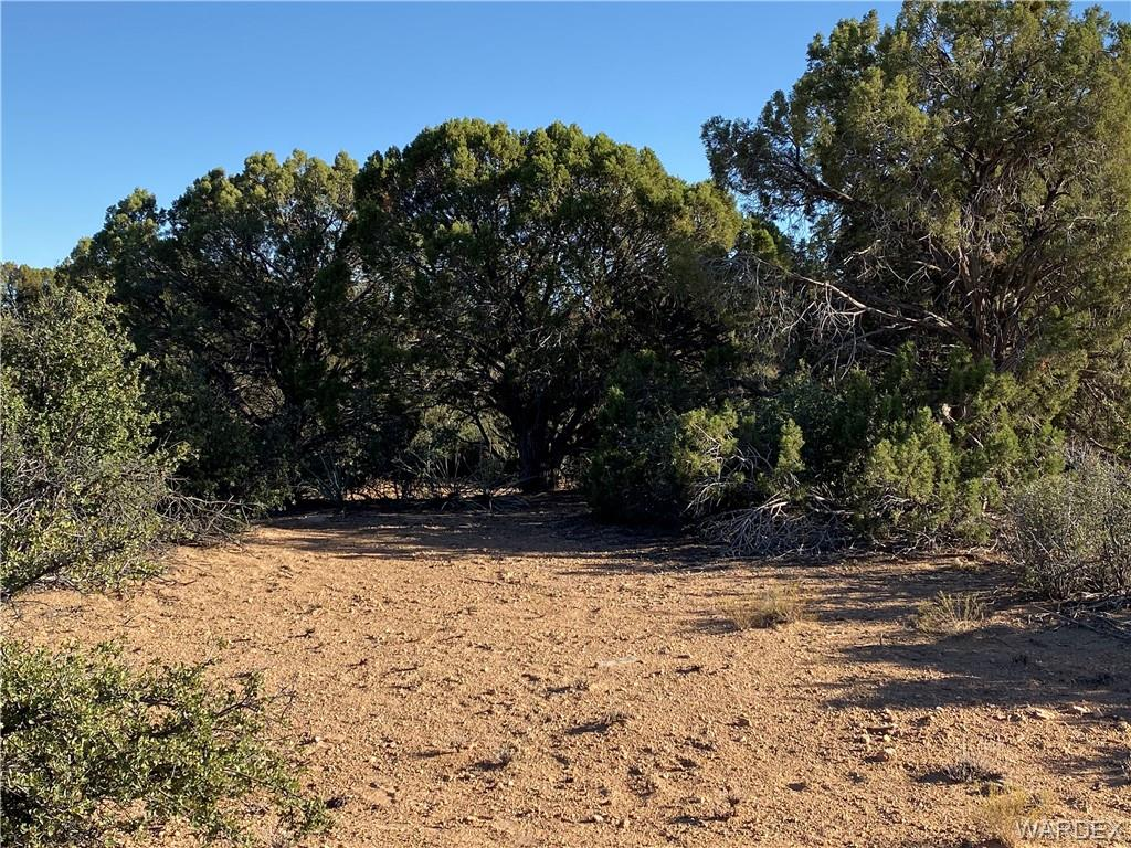 Photo for Lot 124 Mountain Spring Ln, Hackberry, AZ 86411 (MLS # 961686)