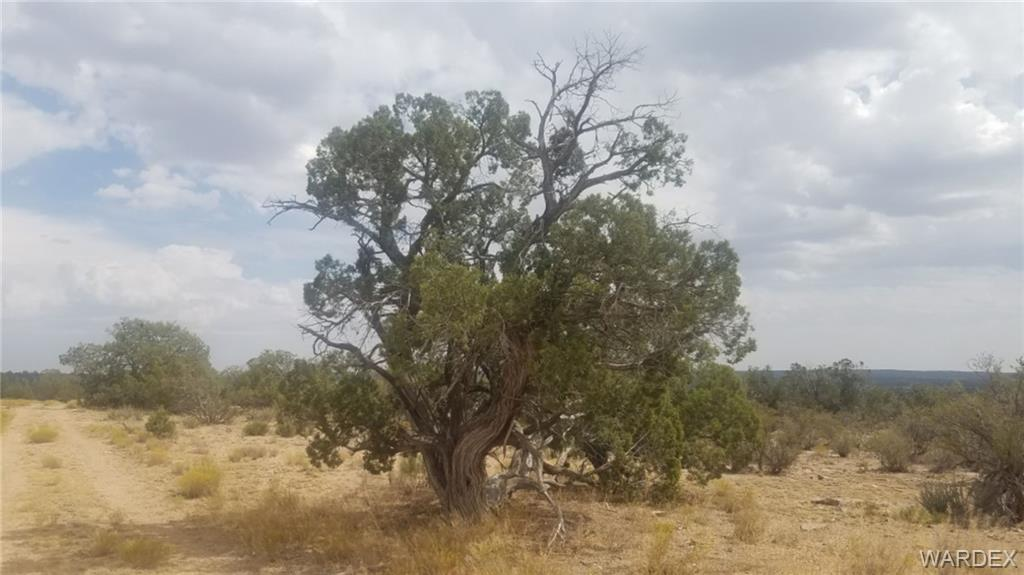 Photo for Lot 723 Blye Canyon, Peach Springs, AZ 86434 (MLS # 974019)