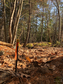 Photo of Lot 5 Richards Ridge Road, Bar Harbor, ME 04609 (MLS # 1401143)