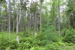 Photo of Lot # 9 Bass Harbor Woods Road, Tremont, ME 04653 (MLS # 1402812)
