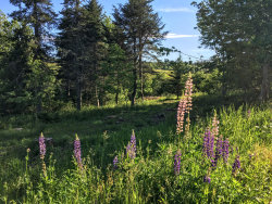 Photo of Lot 7C-B Carleton Stream Lane, Blue Hill, ME 04614 (MLS # 1421945)