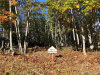 Photo of Lot#5 Rolling Meadow West, Rockport, ME 04856 (MLS # 1433186)