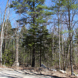 Photo of 0 Old County Road Road, Sedgwick, ME 04676 (MLS # 1444133)