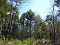 Photo of 61 Gerard's Trail Lane, Blue Hill, ME 04614 (MLS # 1454097)