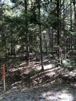 Photo of 0 Black Dog Road, Bar Harbor, ME 04609 (MLS # 1456617)