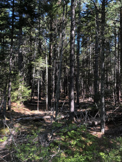 Photo of 0 Summer Harbor Map 7 Lot 4 Road, Winter Harbor, ME 04693 (MLS # 1457407)