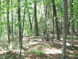 Photo of 0 Off Alonzo Cain Road, Dahlonega, GA 30533 (MLS # 5995035)