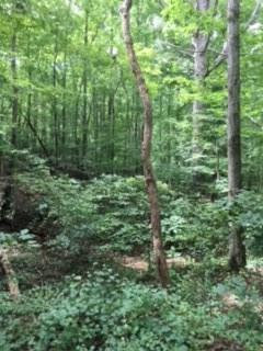 Photo of 0 Chestatee View Dr. +/- 4.06 Acres, Dawsonville, GA 30534 (MLS # 6069089)